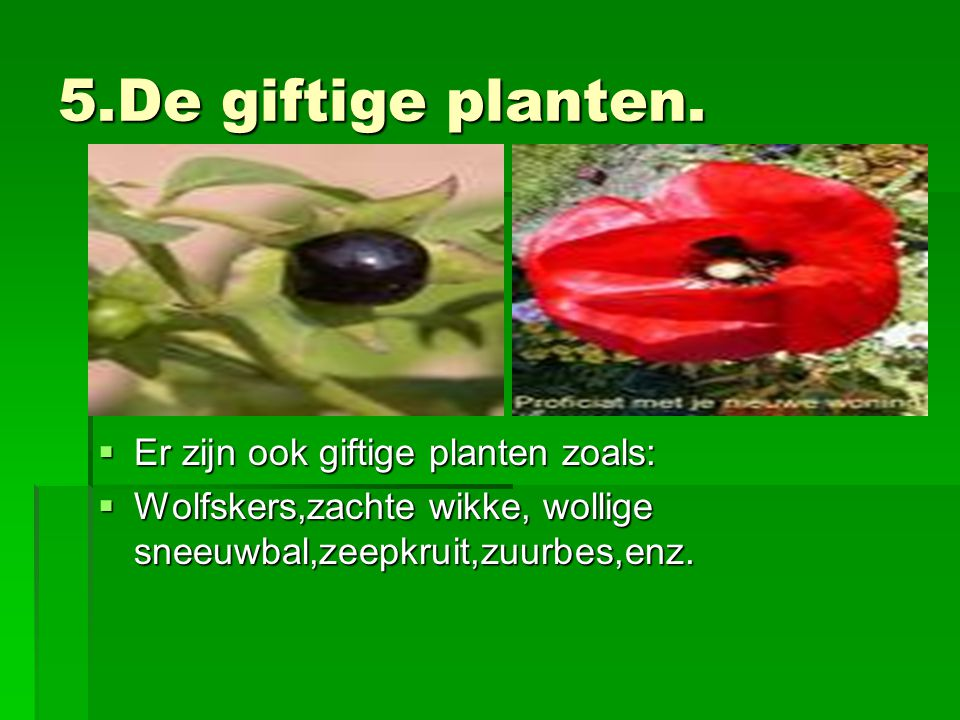5.De giftige planten. Er zijn ook giftige planten zoals: