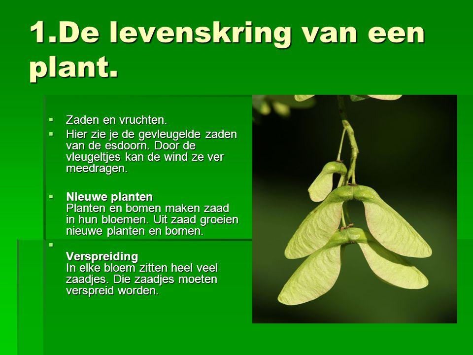1.De levenskring van een plant.