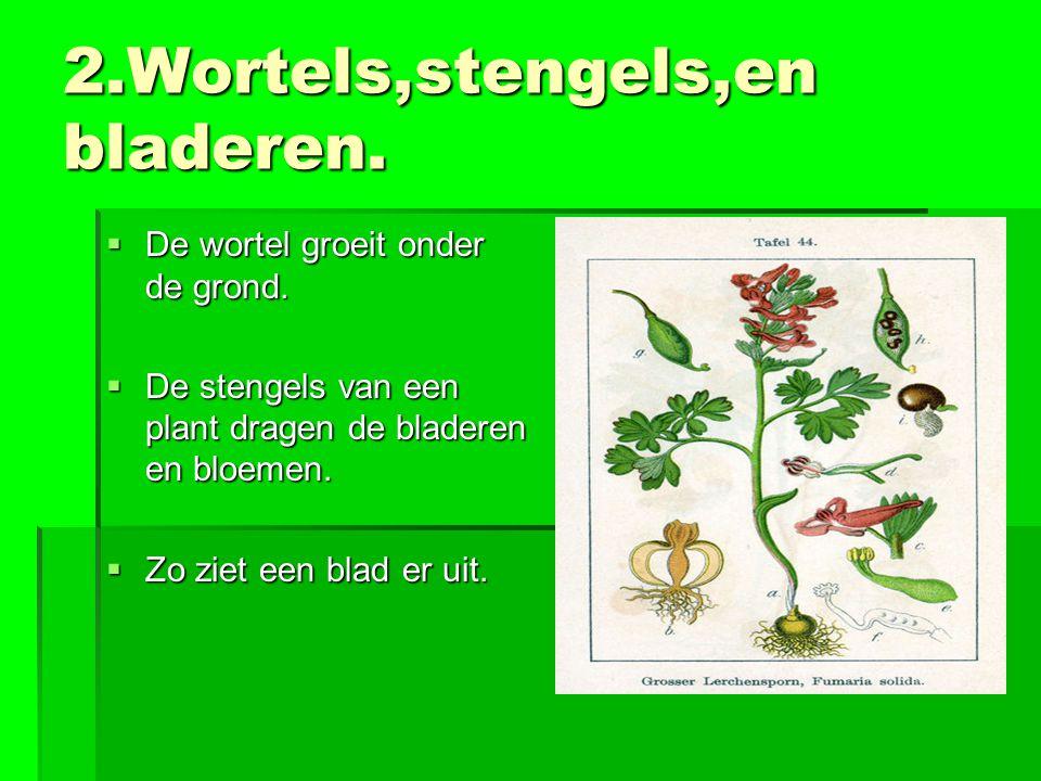 2.Wortels,stengels,en bladeren.