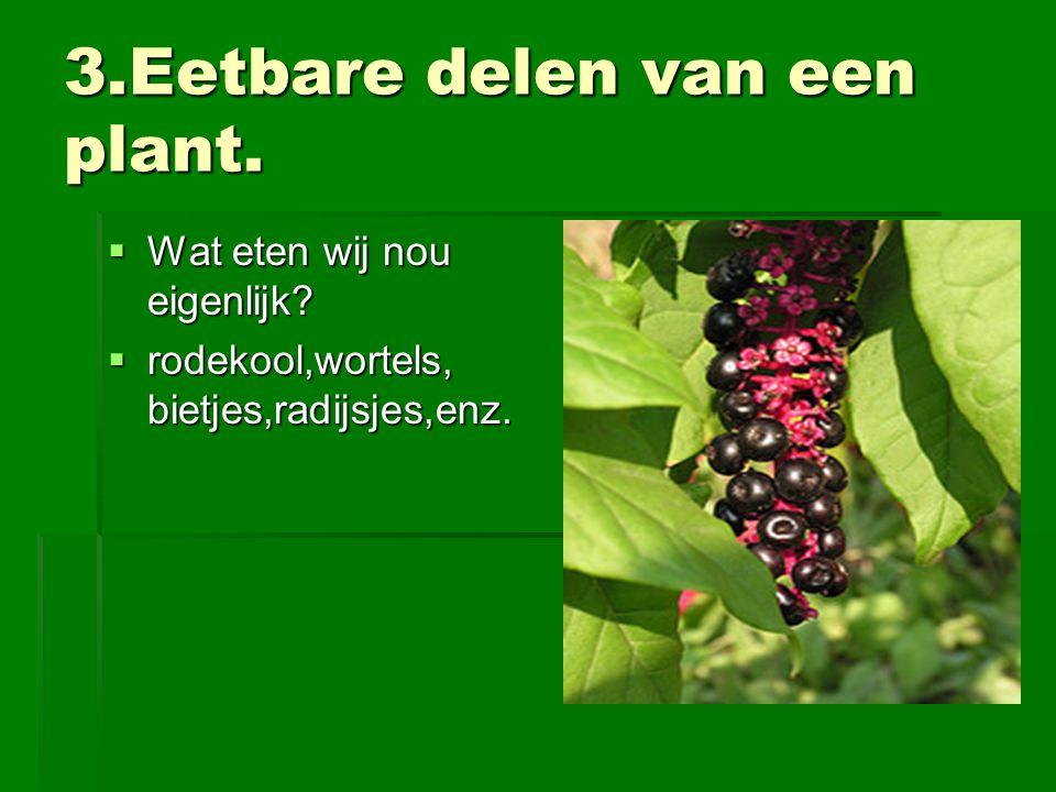 3.Eetbare delen van een plant.