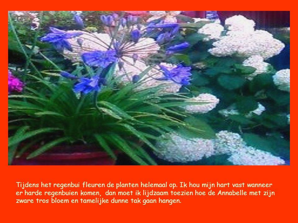 Tijdens het regenbui fleuren de planten helemaal op