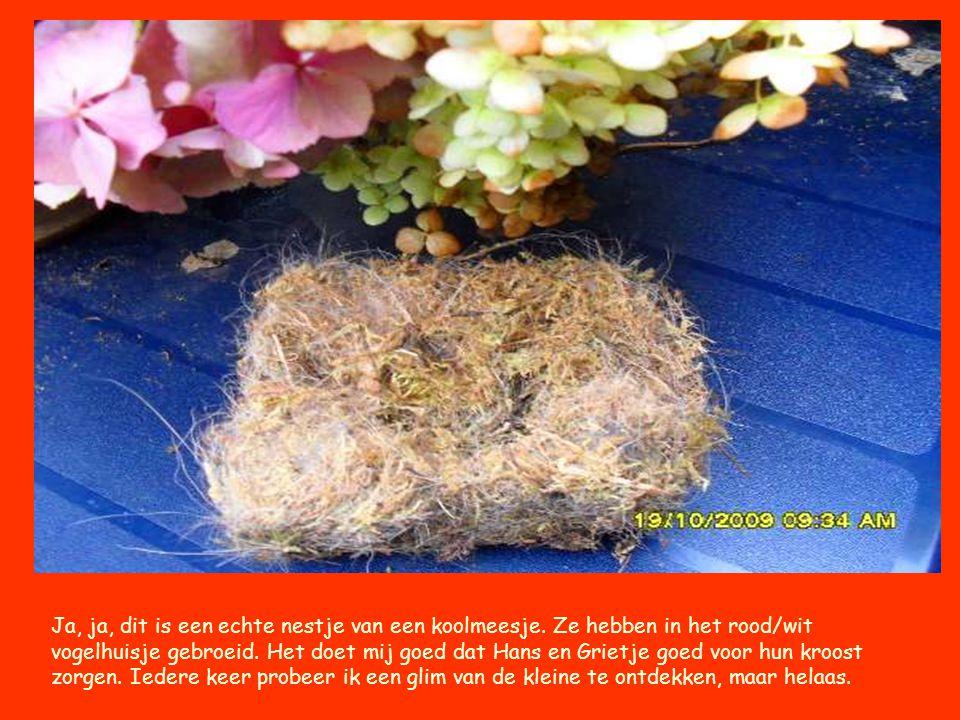 Ja, ja, dit is een echte nestje van een koolmeesje
