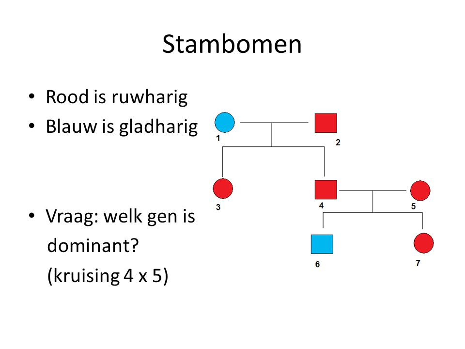 Stambomen Rood is ruwharig Blauw is gladharig Vraag: welk gen is