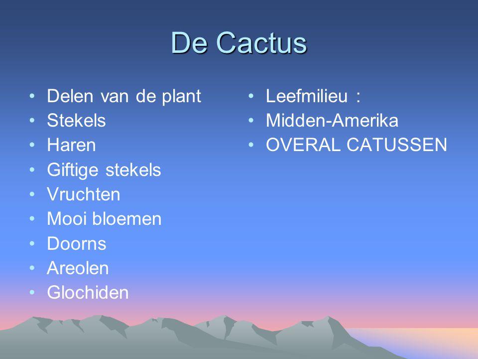 De Cactus Delen van de plant Stekels Haren Giftige stekels Vruchten