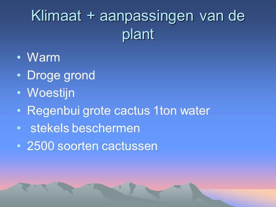 Klimaat + aanpassingen van de plant