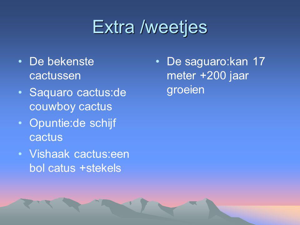 Extra /weetjes De bekenste cactussen Saquaro cactus:de couwboy cactus