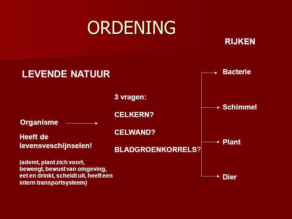 ORDENING LEVENDE NATUUR RIJKEN Bacterie Schimmel 3 vragen: CELKERN