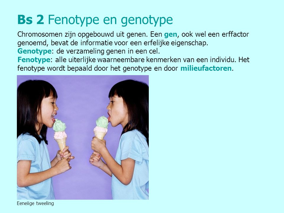 Bs 2 Fenotype en genotype