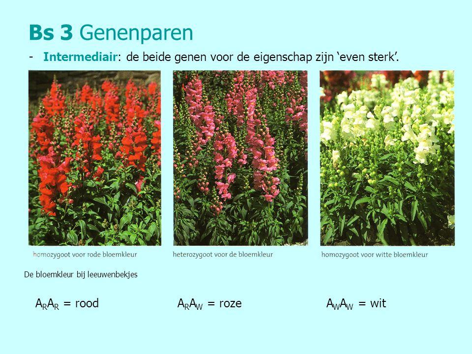 Bs 3 Genenparen - Intermediair: de beide genen voor de eigenschap zijn 'even sterk'. De bloemkleur bij leeuwenbekjes.