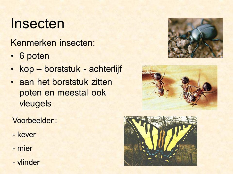 Insecten Kenmerken insecten: 6 poten kop – borststuk - achterlijf