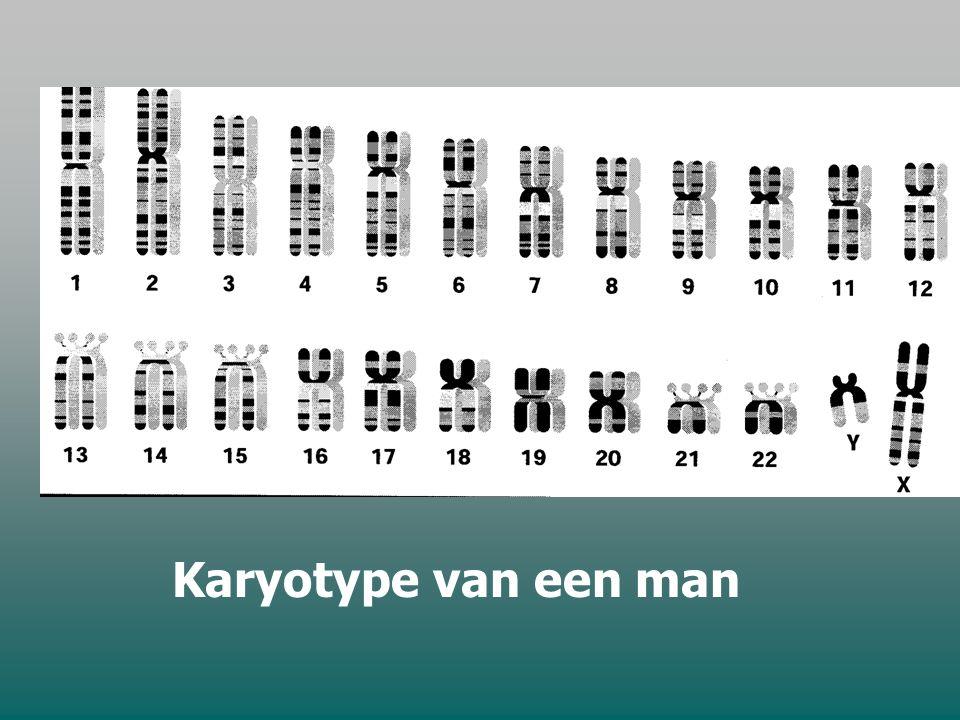 Karyotype van een man