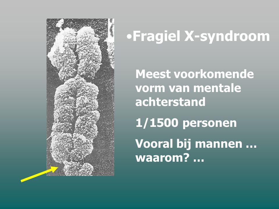 Fragiel X-syndroom Meest voorkomende vorm van mentale achterstand