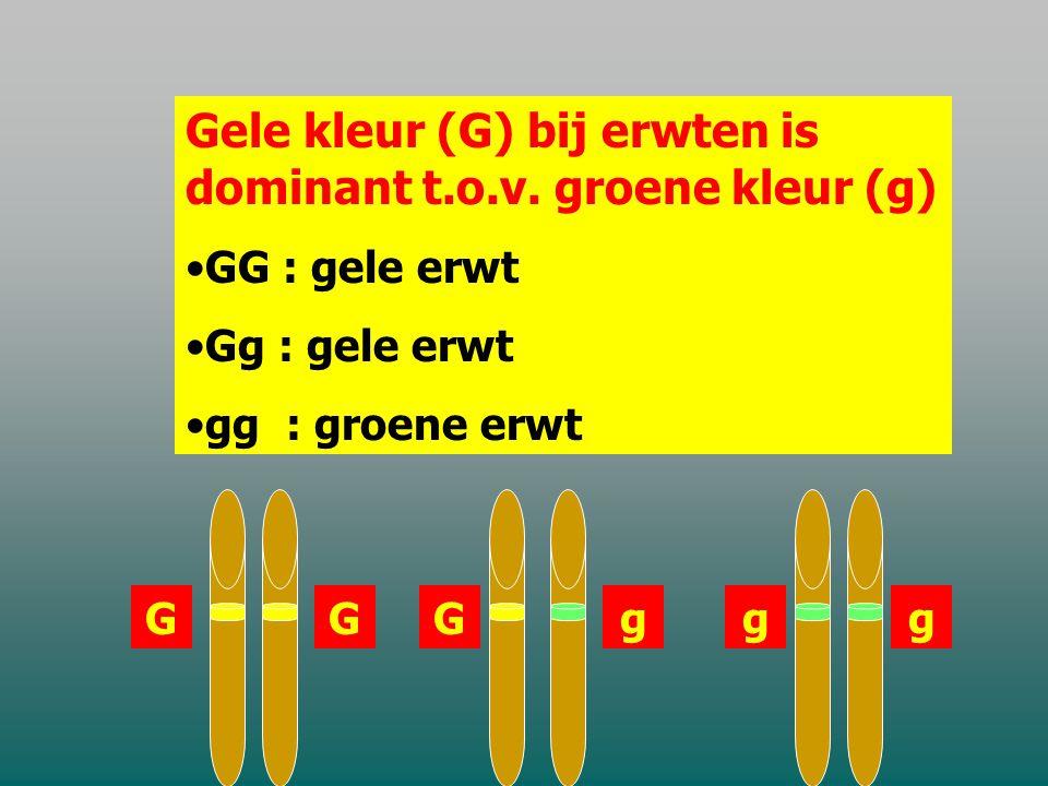 Gele kleur (G) bij erwten is dominant t.o.v. groene kleur (g)