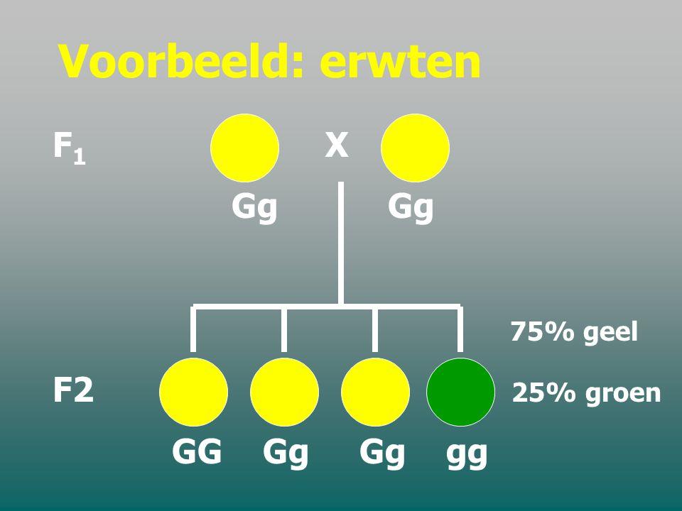 Voorbeeld: erwten F1 X. Gg Gg. 75% geel. F2 25% groen.