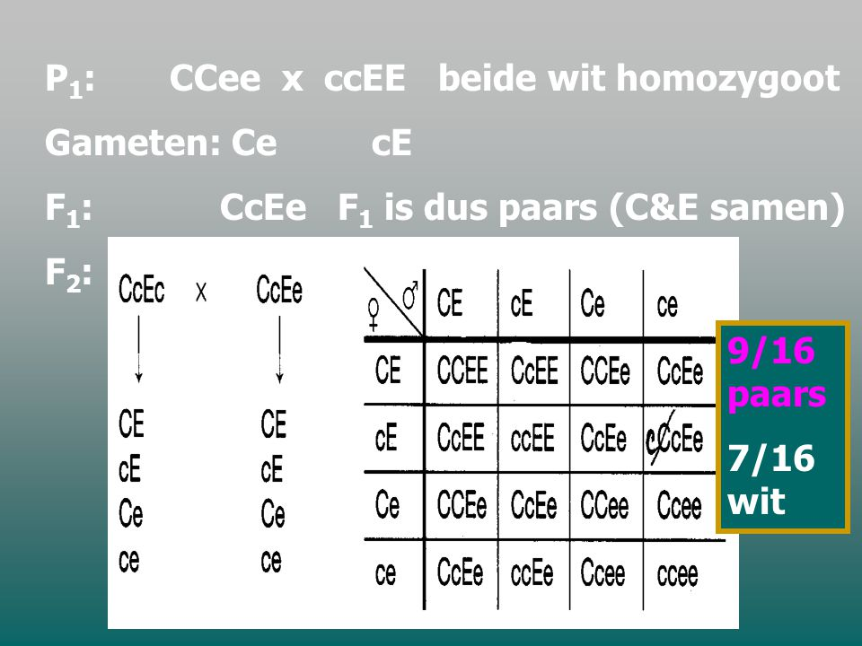 P1: CCee x ccEE beide wit homozygoot Gameten: Ce cE