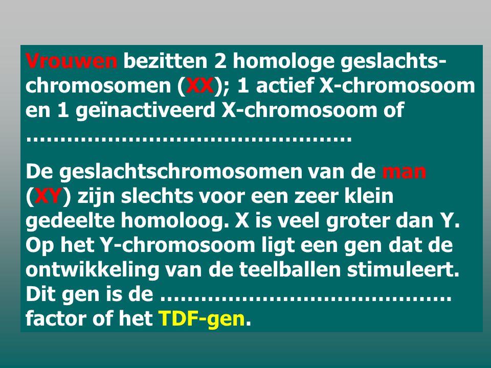 Vrouwen bezitten 2 homologe geslachts- chromosomen (XX); 1 actief X-chromosoom en 1 geïnactiveerd X-chromosoom of …………………………………………