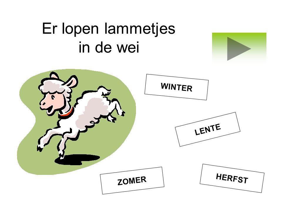Er lopen lammetjes in de wei WINTER LENTE HERFST ZOMER