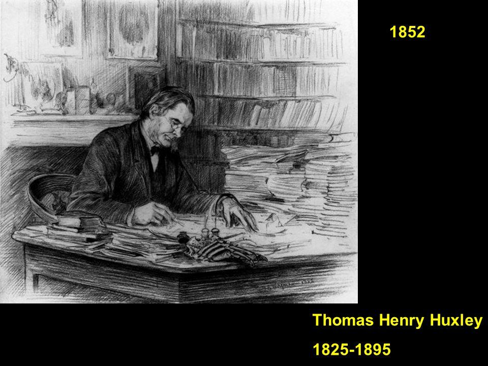 1852 Thomas Henry Huxley 1825-1895