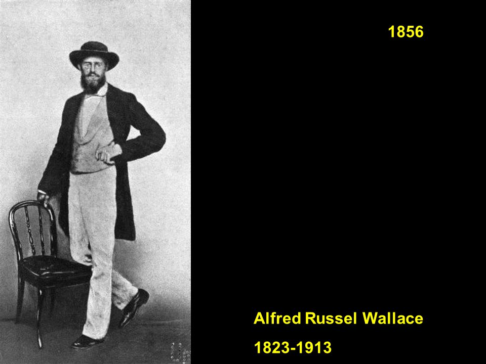 1856 Alfred Russel Wallace 1823-1913