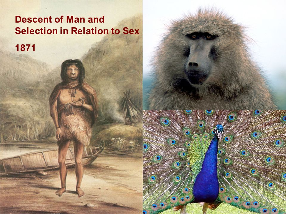 Descent of Man and Selection in Relation to Sex