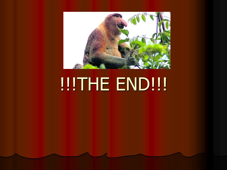 !!!THE END!!!