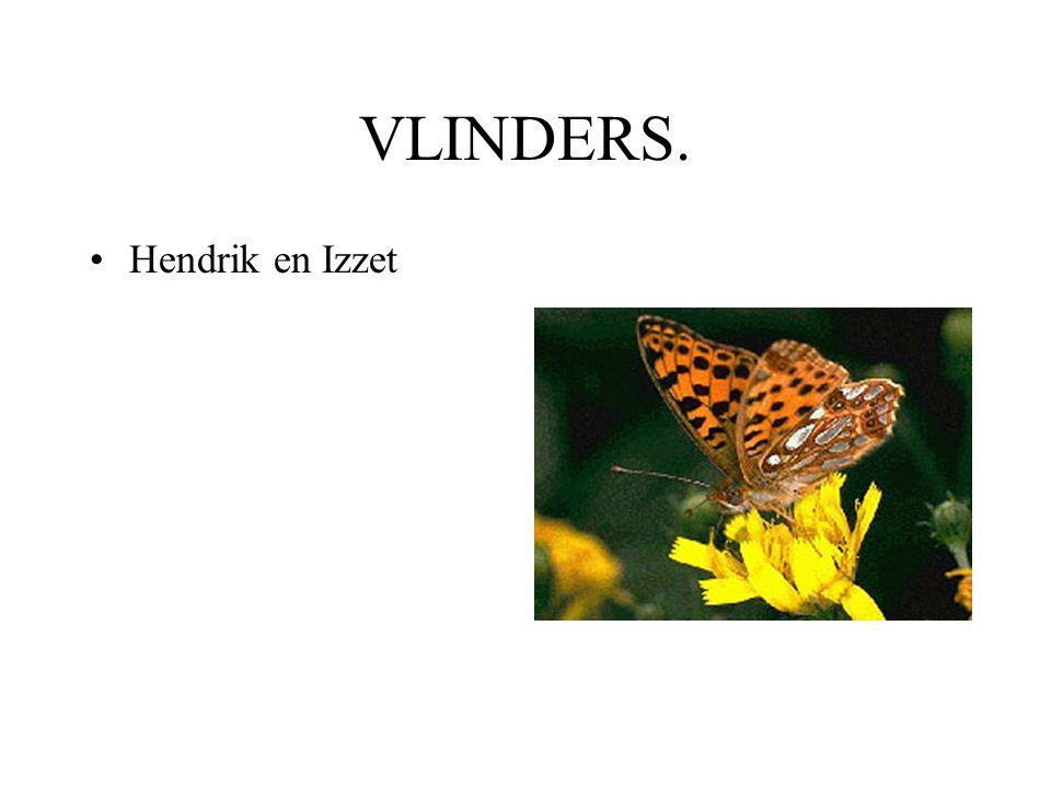 VLINDERS. Hendrik en Izzet