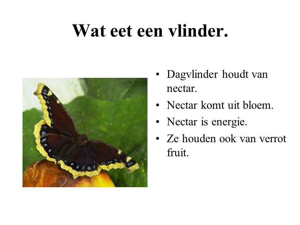 Wat eet een vlinder. Dagvlinder houdt van nectar.