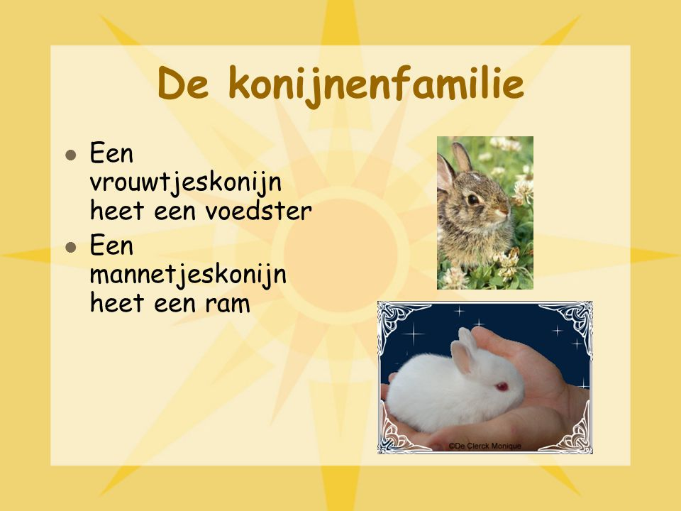 De konijnenfamilie Een vrouwtjeskonijn heet een voedster