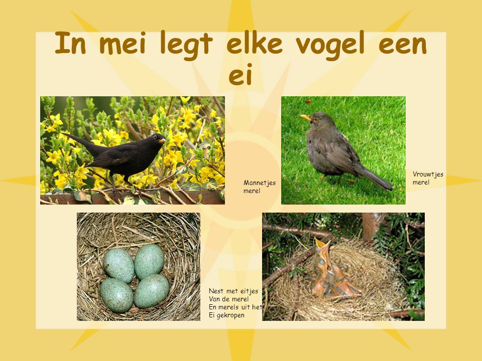 In mei legt elke vogel een ei