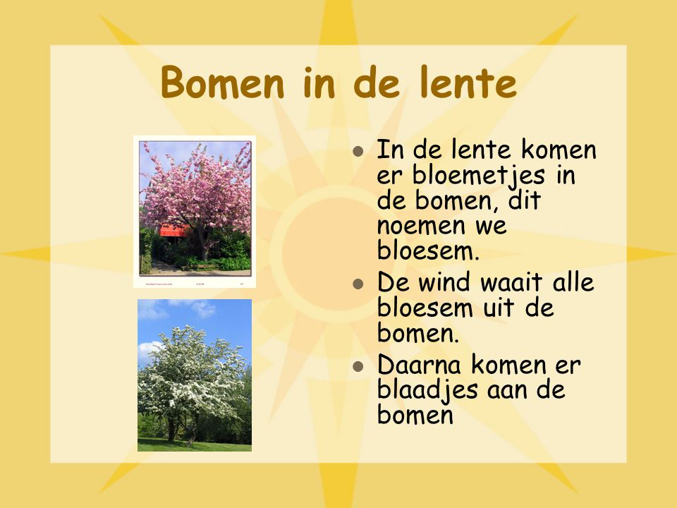 Bomen in de lente In de lente komen er bloemetjes in de bomen, dit noemen we bloesem. De wind waait alle bloesem uit de bomen.