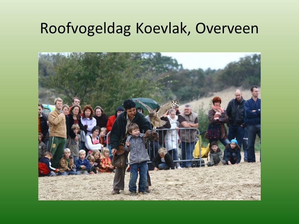 Roofvogeldag Koevlak, Overveen