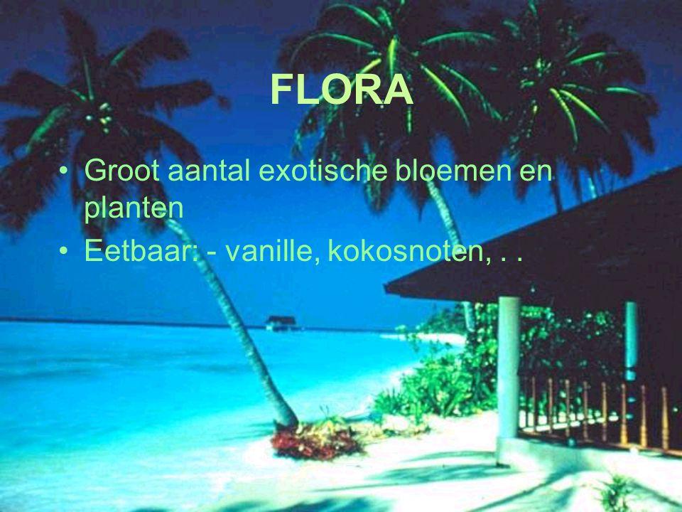 FLORA Groot aantal exotische bloemen en planten