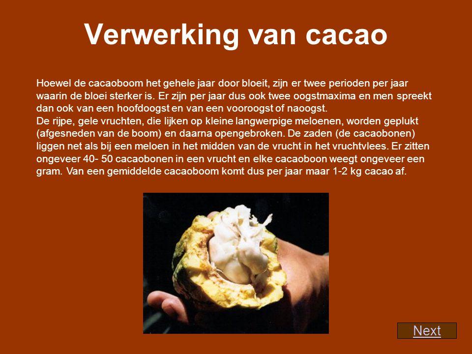 Verwerking van cacao Next