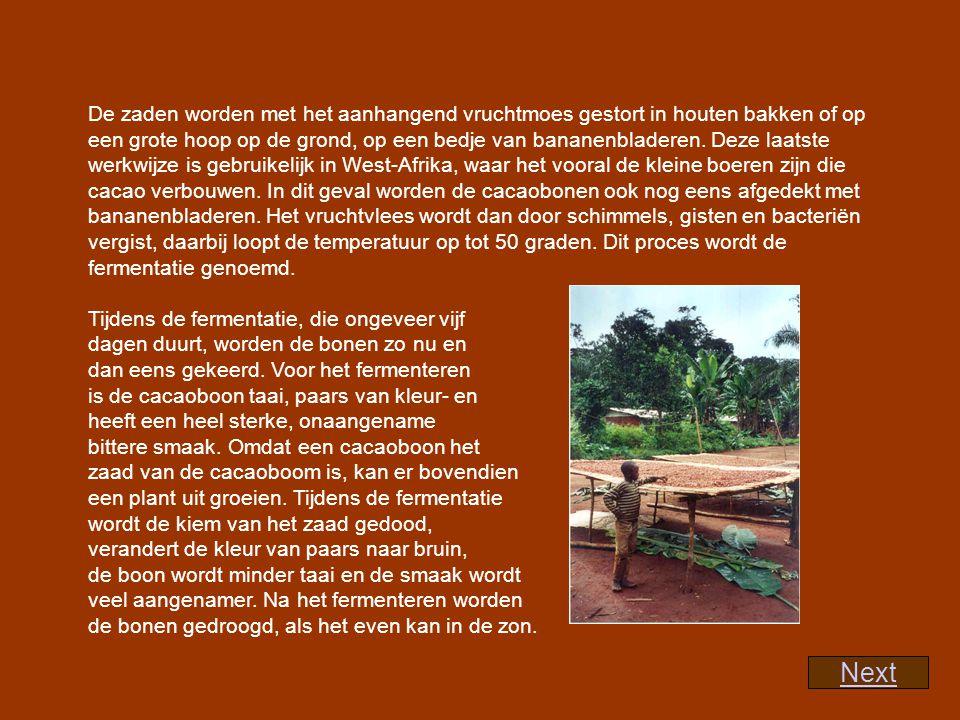 De zaden worden met het aanhangend vruchtmoes gestort in houten bakken of op een grote hoop op de grond, op een bedje van bananenbladeren. Deze laatste werkwijze is gebruikelijk in West-Afrika, waar het vooral de kleine boeren zijn die cacao verbouwen. In dit geval worden de cacaobonen ook nog eens afgedekt met bananenbladeren. Het vruchtvlees wordt dan door schimmels, gisten en bacteriën vergist, daarbij loopt de temperatuur op tot 50 graden. Dit proces wordt de fermentatie genoemd.