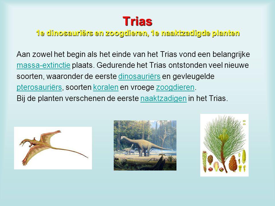 Trias 1e dinosauriërs en zoogdieren, 1e naaktzadigde planten