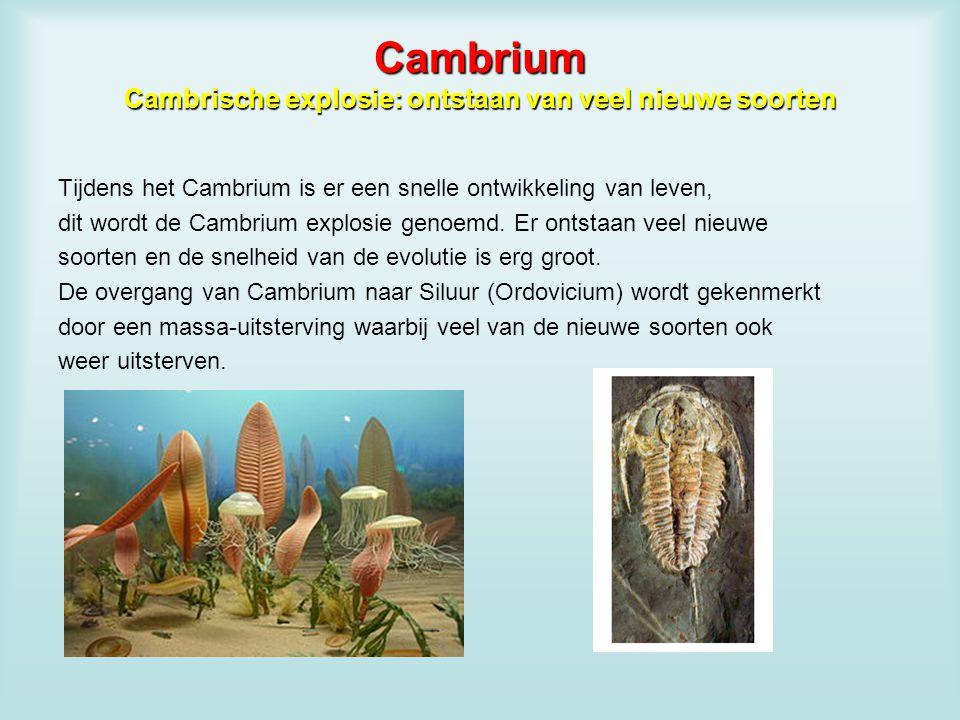 Cambrium Cambrische explosie: ontstaan van veel nieuwe soorten