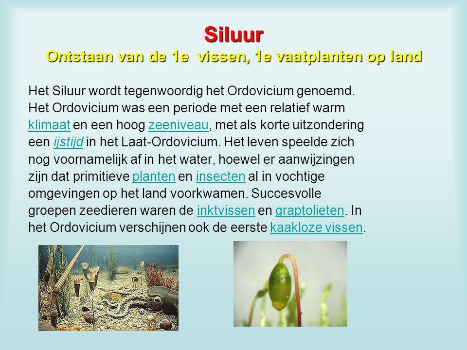 Siluur Ontstaan van de 1e vissen, 1e vaatplanten op land