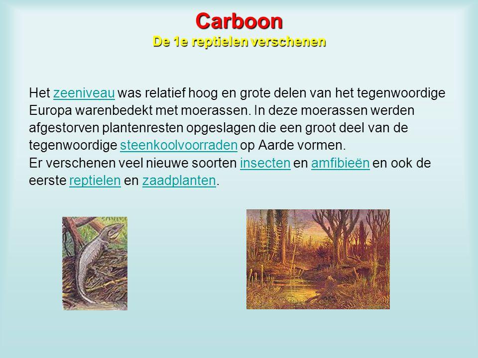 Carboon De 1e reptielen verschenen
