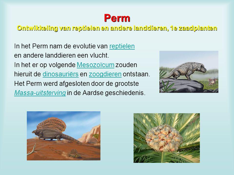 Perm Ontwikkeling van reptielen en andere landdieren, 1e zaadplanten