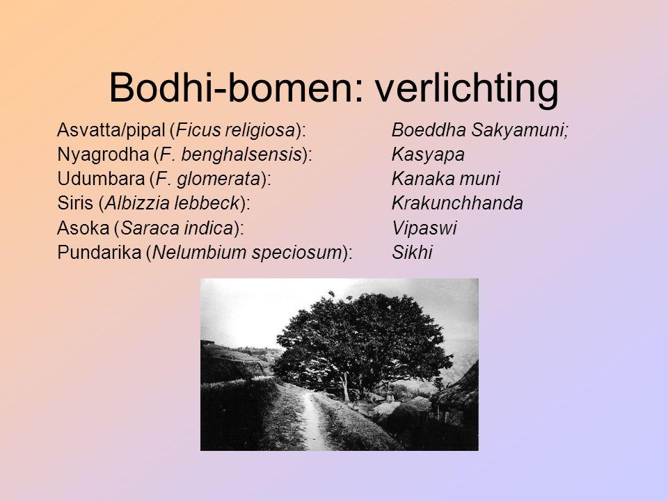 Bodhi-bomen: verlichting