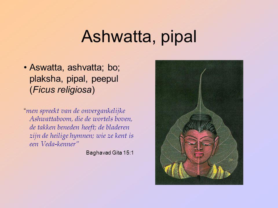 Ashwatta, pipal Aswatta, ashvatta; bo; plaksha, pipal, peepul (Ficus religiosa)