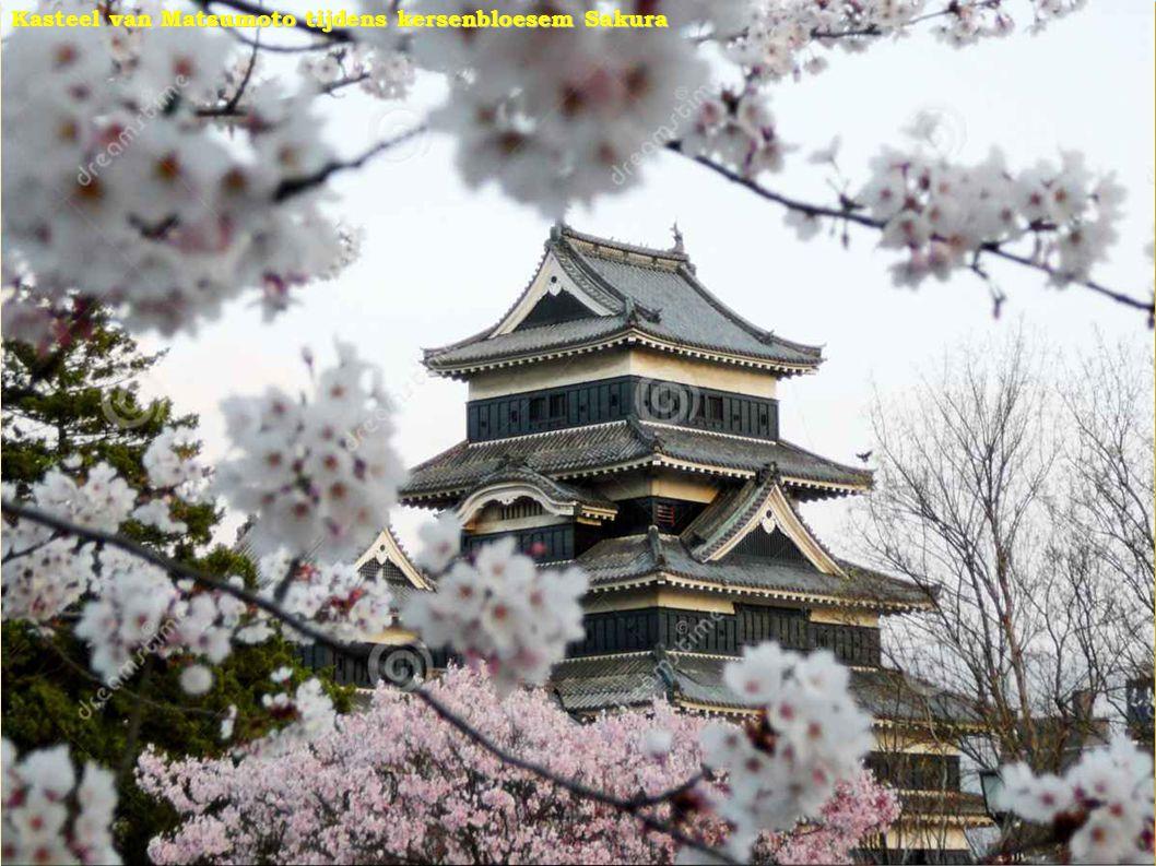 Kasteel van Matsumoto tijdens kersenbloesem Sakura