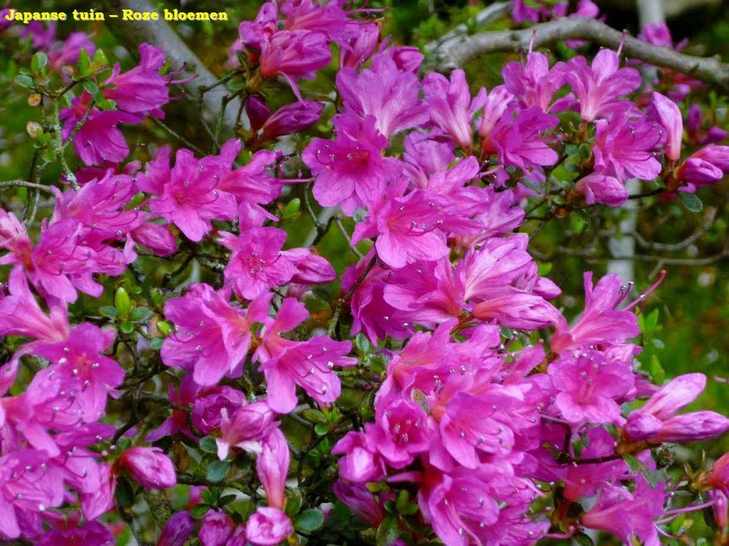 Japanse tuin – Roze bloemen