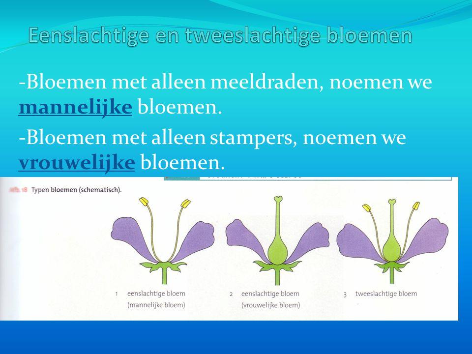 Eenslachtige en tweeslachtige bloemen