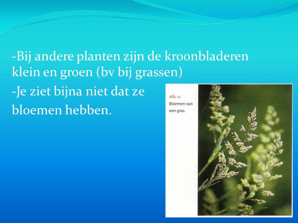 -Bij andere planten zijn de kroonbladeren klein en groen (bv bij grassen)