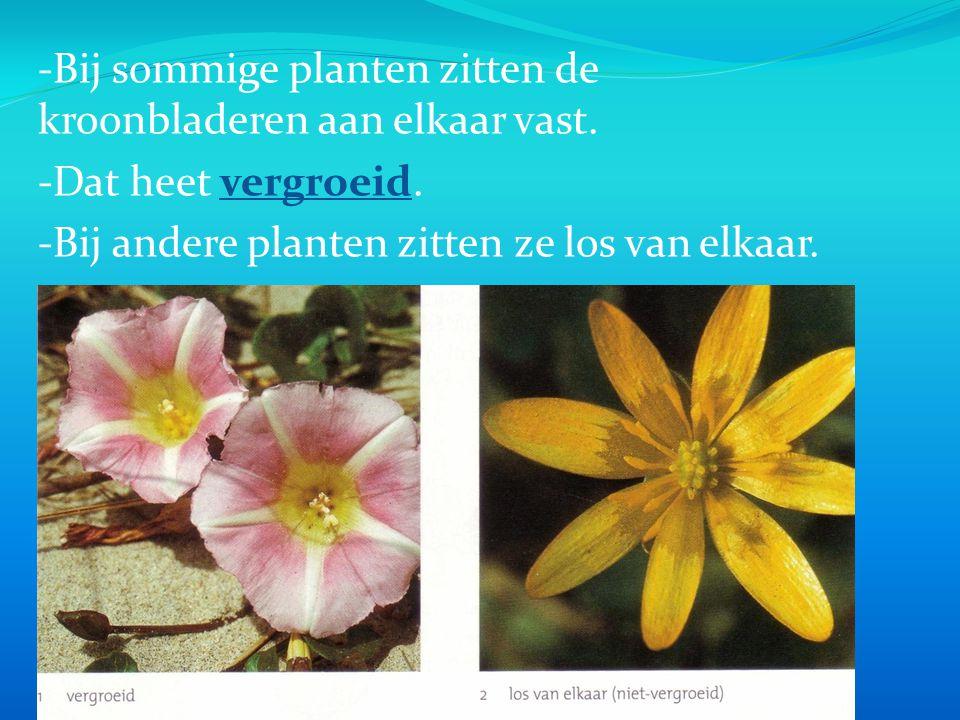 -Bij sommige planten zitten de kroonbladeren aan elkaar vast.