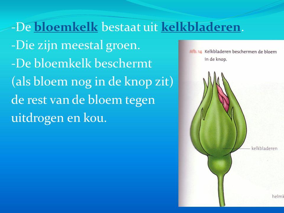 -De bloemkelk bestaat uit kelkbladeren.