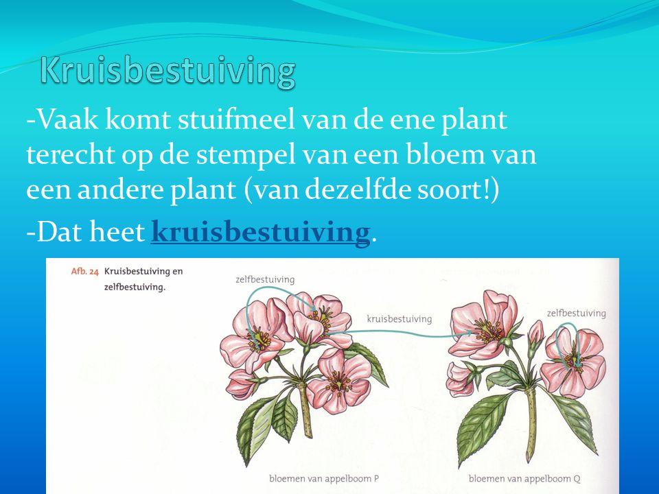Kruisbestuiving -Vaak komt stuifmeel van de ene plant terecht op de stempel van een bloem van een andere plant (van dezelfde soort!)