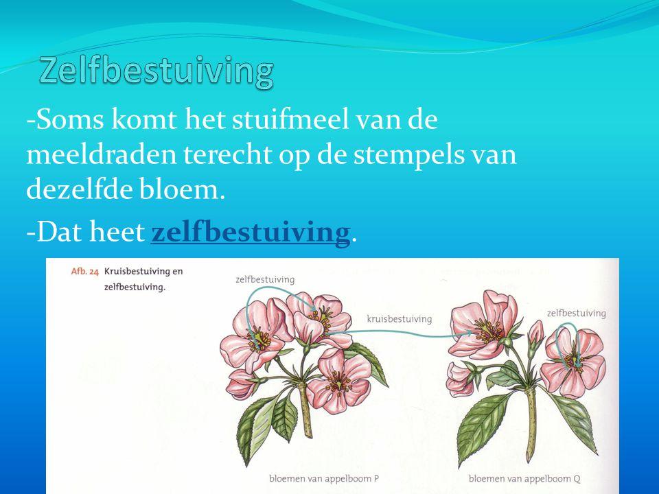 Zelfbestuiving -Soms komt het stuifmeel van de meeldraden terecht op de stempels van dezelfde bloem.