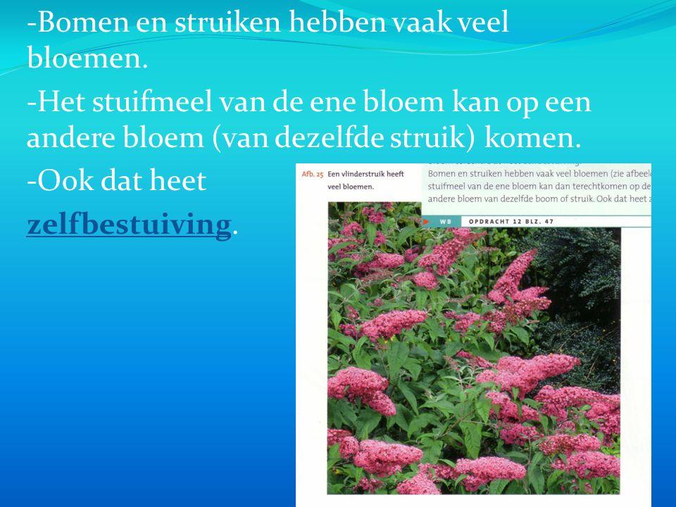 -Bomen en struiken hebben vaak veel bloemen.